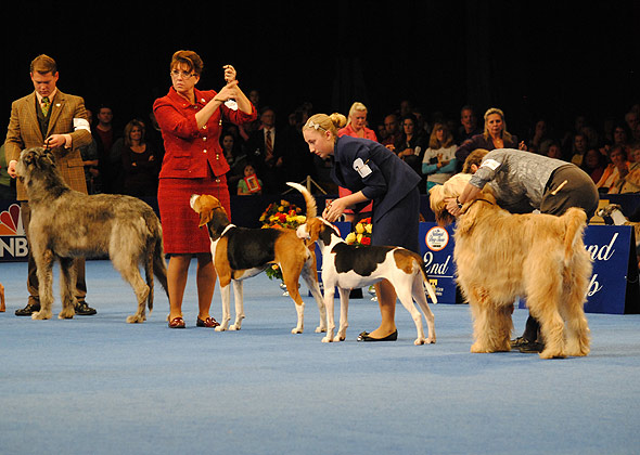 National Dog Show Hound Group