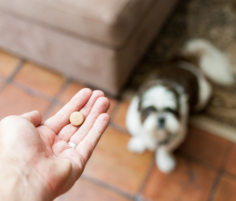 Giving dog a pill