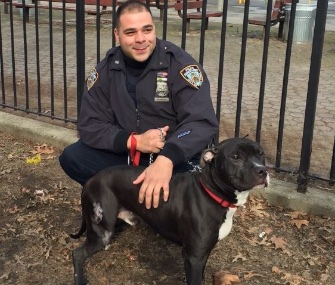 NYPD Officer DeAngelis and his partner helped a family with their injured dog, Midnight.