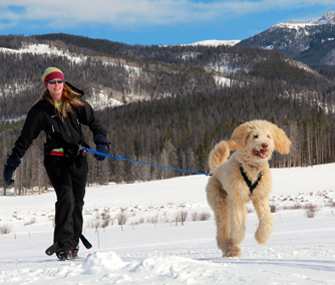 woman skijoring with dog in snow