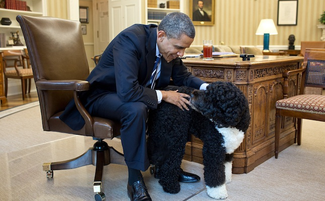 Bo Obama and President Obama in Oval Office