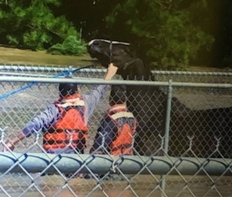Rescue crews waded through floodwaters to help Bob the horse out of his pen in North Carolina.