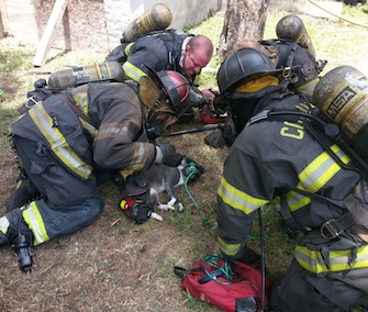 Soldier the cat was revived by firefighters in Columbia, South Carolina, Wednesday.