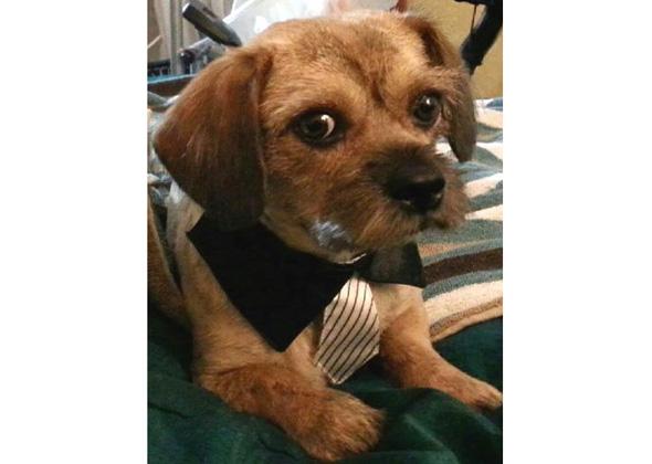 Dog dressed for conference.
