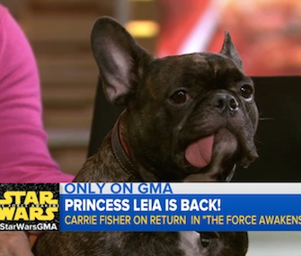 Gary, actress Carrie Fisher's French Bulldog, nearly stole the spotlight during an interview on ABC News that went viral.