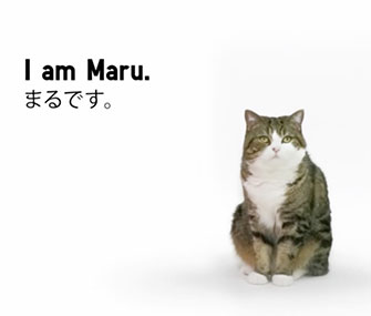 Maru appears in an Uniquo commercial