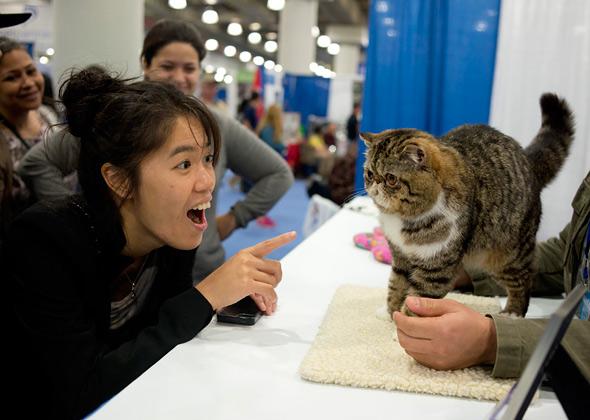 Meet the Breeds Persian Cat