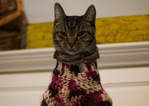 cat in multi-colored sweater