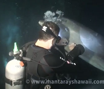 A clever dolphin sought help from a diver when he was tangled in fishing line.