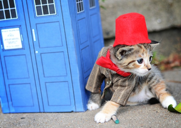 Wendy McKee kitten Doctor Who