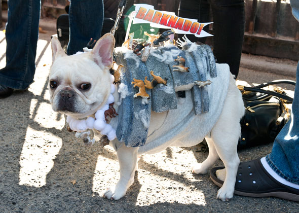 Dog Halloween Parade Sharknado