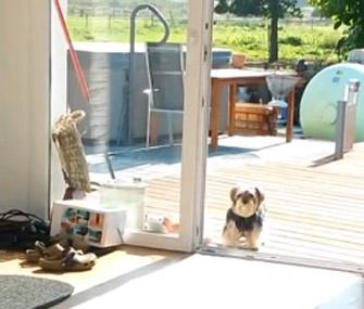 Dog Wont Use Pet Door
