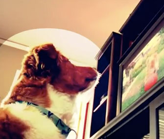 DogTV screenshot
