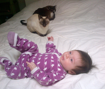 two cats and a baby on a bed
