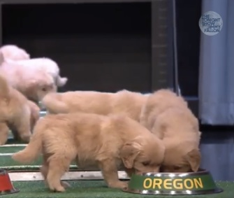 Jimmy Fallon's famed Puppy Predictors go for Oregon in the college football championship game.