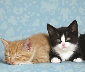 These kittens at the U.K.'s Battersea shelter will get names that were betters' favorite for the royal baby.