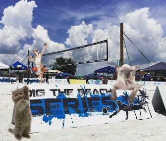 cats playing volleyball