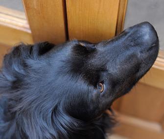 Dog at door