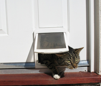 Cat going through flap