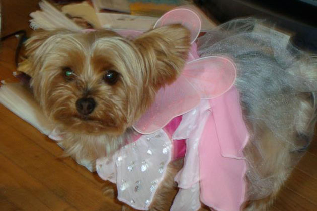 3. Gigi the Fairy