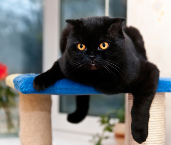 Black cat lounging on scratching post