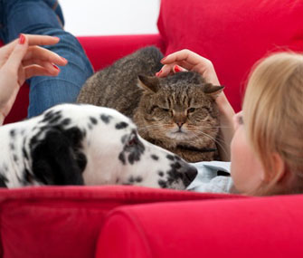 Dog and cat on couch with owner