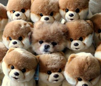 Stuffed Boo