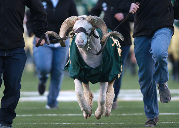 CAM the Ram Colorado State