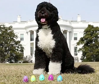 Bo poses with his Easter eggs in front of the White House.