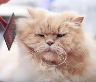 Cat Fur