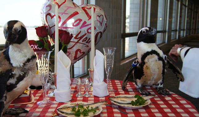 Penguins celebrate 22nd Valentine's Day