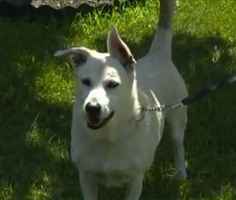 Dog saves stranded owner