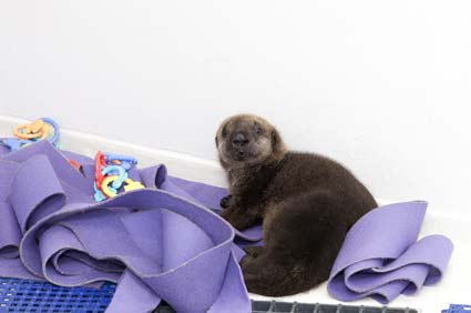 otter and toys