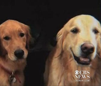 Golden Retrievers Baxter and Bailey are back home after going missing in Cape Cod, Mass.