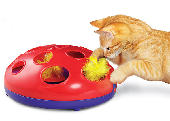 Kitten playing with the Kong Glide and Seek Toy