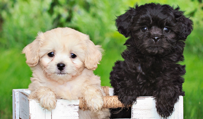 What Kind Of Dog Is Peek In Cats And Dogs