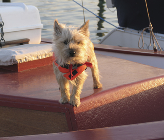 Can Dogs Get Seasick