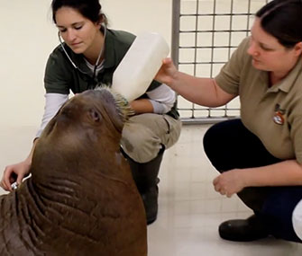 Pakak gets a bottle and a checkup from his keepers.