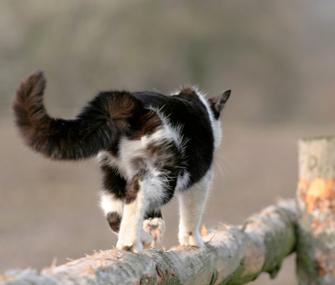 Cat roaming outdoors