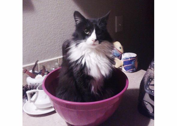 Cat Sitting in Bowl