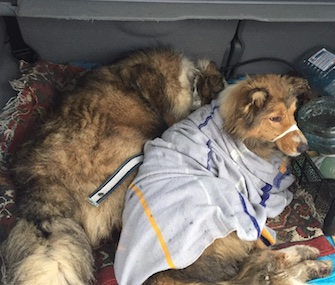 An injured dog and her loyal friend were rescued from train tracks in Ukraine.