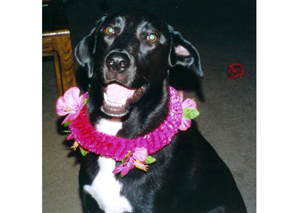 Yuki wearing a lei