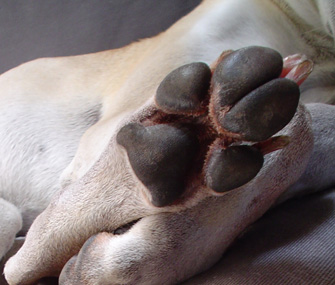 Why Do Dogs and Cats Have Paw Pads?