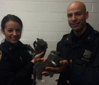 NYPD officers saved six tiny gray kittens who were abandoned in a suitcase.