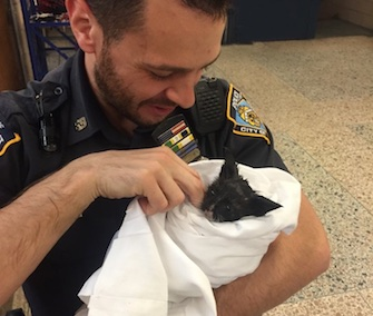 NYPD Officer Reiff holds the kitten he rescued from the engine of a parked car in Brooklyn.