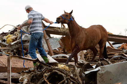 Horse rescued from tornado rubble