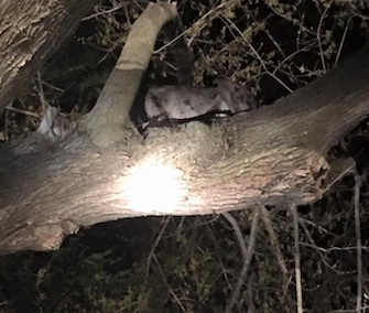 Firefighters and police in Nebraska helped get a Great Dane down from a tree branch.