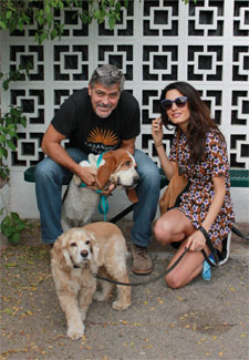 George and Amal Clooney adopt shelter dog