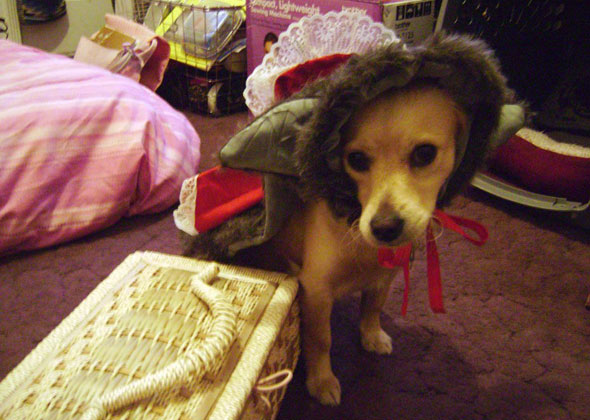 Dog as Little Red Riding Hood