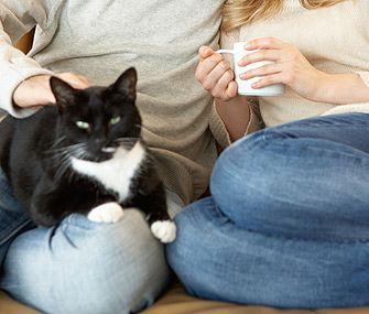 Cat sitting with couple